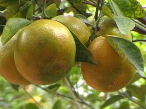 """Cung cấp về 5 loại trái cây có tác dụng làm trẻ hóa da """"thần kì"""""""